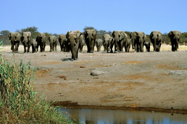 Elephant-Pictures-646x970